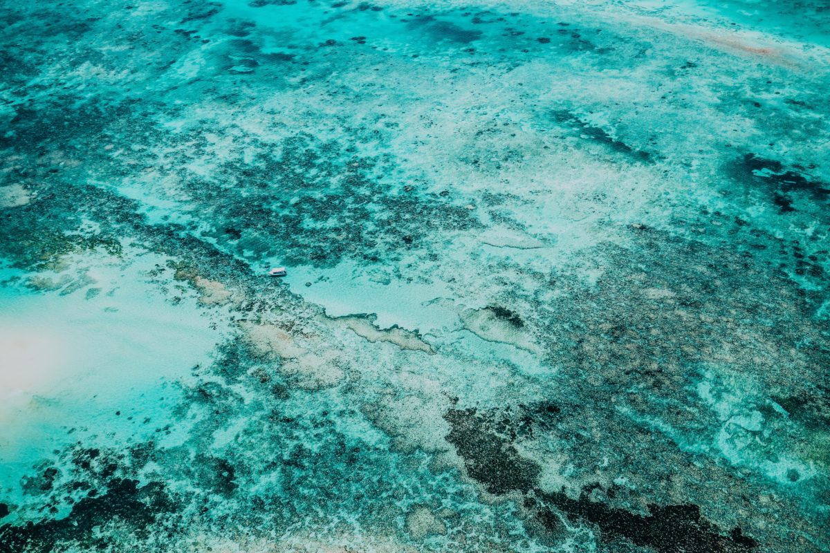 The UAS Industry is Making Waves in Ocean Conservation Efforts